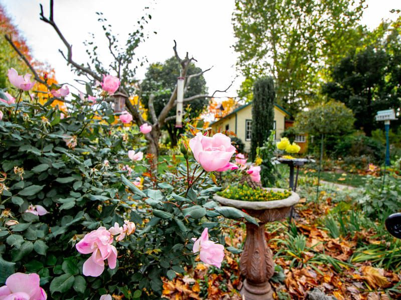The grounds at Emily's Bed and Breakfast are beautifully maintained throughout the year for guests to enjoy!