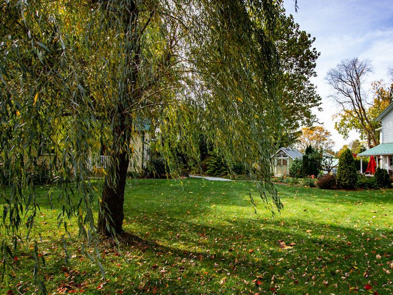 Relax under our beautiful whispering willow trees nestled along our property!